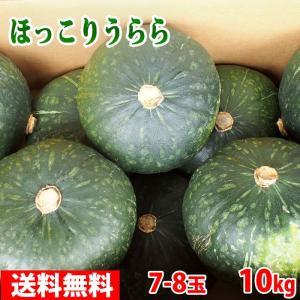 送料無料 北海道産 南瓜(かぼちゃ) ほっこりうらら 9〜10玉入り(10kg) promart-jp