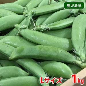 鹿児島県産 スナップえんどう A等級・Lサイズ 1kg(1箱)