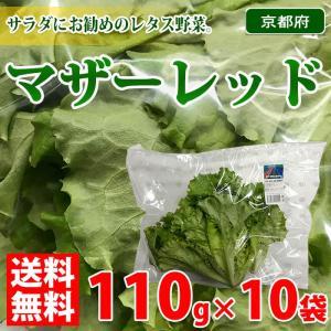 【送料無料】京都府産 マザーレッド 110g×10袋入り 1箱|promart-jp