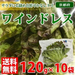 【送料無料】京都府産レタス ワインドレス 120g×10袋入り(1ケース)|promart-jp