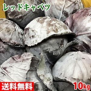 【送料無料】岡山県産 レッドキャベツ M〜Lサイズ 10kg(7〜9玉入り)|promart-jp