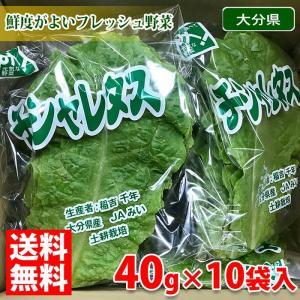 送料無料 大分県産 チシャレタス 約40g×10袋入り(箱)|promart-jp