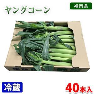 福岡県産 ヤングコーン(皮付き)40本入り/箱|promart-jp