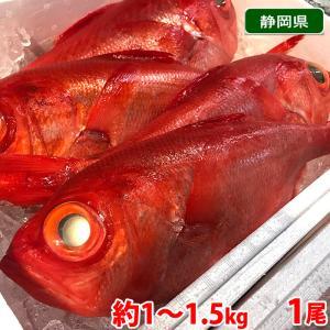 【送料無料】静岡県産 金目鯛(キンメダイ)1尾 1kg〜1.5kg(正味 700g前後) promart-jp
