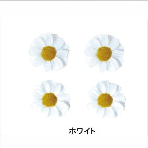 BASIL BASIL FLOWER バジル バジルフラワー ホワイト qbei