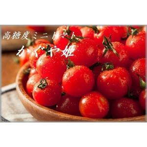 特別栽培 高級ミニトマト かぐや姫 1kg|qtsuhanshop