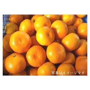 【送料無料】茜塩みかん 1箱 10kg  S・M・Lサイズ混合|qtsuhanshop