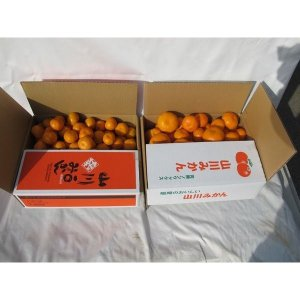 【送料無料】山川産 一口みかん(5kg)&フリーサイズみかん(5kg)|qtsuhanshop|03