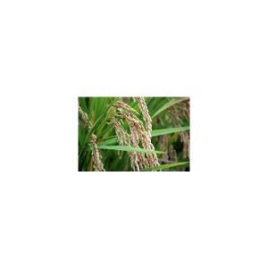 【送料無料】【28年産新米】大分県産 原農園のひのひかり 玄米 10kg【減農薬栽培特別米】【無化学肥料栽培】【原農園】|qtsuhanshop|06