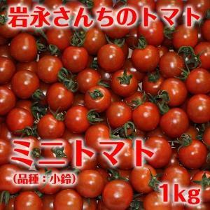 【送料無料】岩永さんちのとまと  ミニトマト(品種:小鈴・アイコ) 1kg【産地直送】|qtsuhanshop