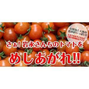 【送料無料】岩永さんちのとまと  ミニトマト ミックス 2kg【産地直送】|qtsuhanshop|02