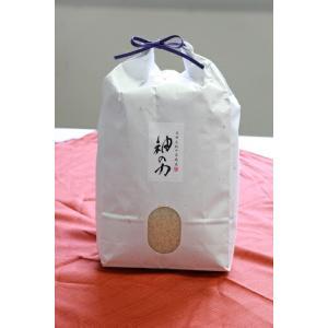 北村広紀の自然米「神の力」白米 コシヒカリ 5kg【無農薬玄米・無肥料米・自然農法】|qtsuhanshop