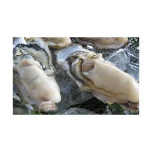 牡蠣 カキ 仮屋湾産殻付き真牡蠣(3kg) カキナイフ・軍手付|qtsuhanshop