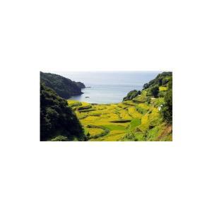 米 コシヒカリ お米 (30年産) 浜野浦棚田こしひかり 5kg|qtsuhanshop|03