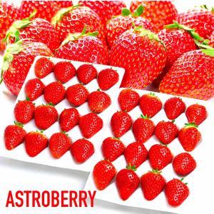 常識を超えた甘さ「絶品」 夏いちご 「ASTROBERRY アストロベリー」糖度:10度以上 特大 ...