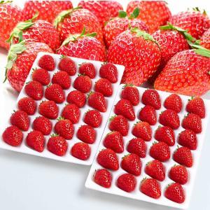 常識を超えた甘さ「絶品」 夏いちご 「ASTROBERRY アストロベリー」糖度:10度以上 大粒 ...