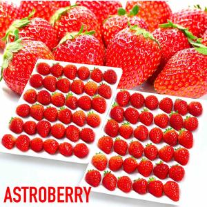 常識を超えた甘さ「絶品」 夏いちご 「ASTROBERRY アストロベリー」糖度:10度以上 Sサイ...