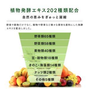 Natural Healthy Standard ミネラル酵素スムージー|queensshop|11