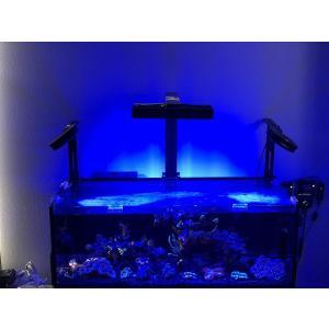 アクアイルミネーション AI ハイドラ52HD LEDライト ブラック