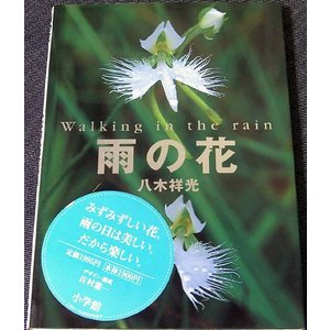 雨の花 Walking in the rain ―八木祥光写...