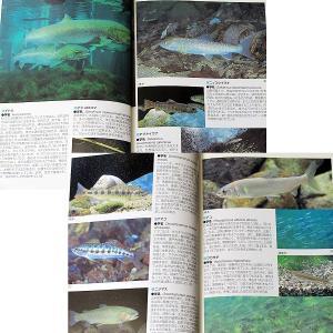 川魚完全飼育ガイド ―日本産淡水魚の魅力満載|r-books|02