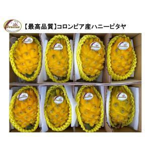 グラシアス ハニーピタヤ(コロンビア産)大玉8玉入(約2.5kg) rainbowfresh-online