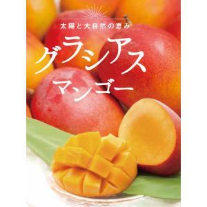 グラシアスマンゴー (ペルー産ケント種)特大4玉入(約2kg) rainbowfresh-online