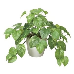 観葉植物 人工観葉 フェイクグリーン インテリアグリーン 空気清浄 光の楽園 飾るだけで消臭・防菌・ホルムアルデヒド除去 フレッシュポトス 高さ36cm rakusouya