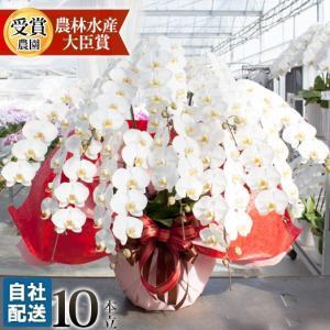 胡蝶蘭 開店祝い 開業祝い 開院祝い 大輪 正月 お歳暮 ギフト お祝い お供え 10本立ち 108000 [r-tokubetu10f-fw] ranbo