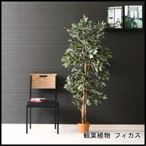 観葉植物 フィカス 690 B 52663 代引き不可 送料無料|rankup