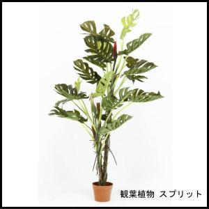 観葉植物 スプリット 22 52667 代引き不可 送料無料|rankup