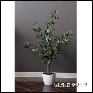 観葉植物 オリーブ 312 52689 代引き不可 送料無料|rankup