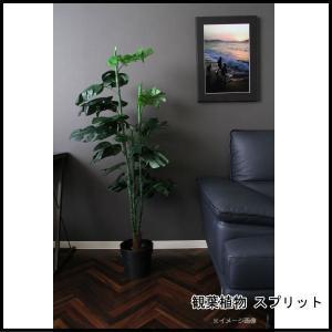 観葉植物 スプリット 32 52690 代引き不可 送料無料|rankup