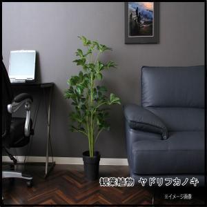 観葉植物 ヤドリフカノキ 216 52693 代引き不可 送料無料|rankup
