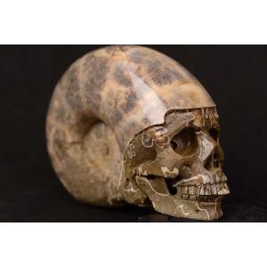 一点物 アンモナイト化石 ヒューマンスカル(人間頭蓋骨) カービング(彫刻) 1125g|白亜紀|マダガスカル産|rapanui