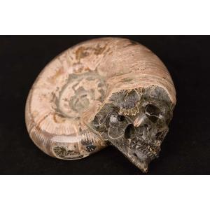 一点物 アンモナイト化石 ヒューマンスカル(人間頭蓋骨) カービング(彫刻) 895g|白亜紀|マダガスカル産|rapanui