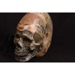一点物 アンモナイト化石 ヒューマンスカル(人間頭蓋骨) カービング(彫刻) 1169g|白亜紀|マダガスカル産|rapanui