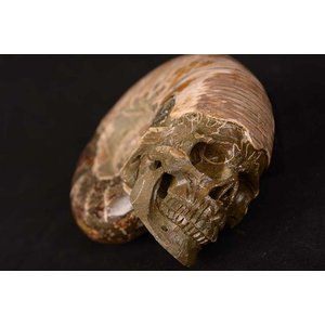 一点物 アンモナイト化石 ヒューマンスカル(人間頭蓋骨) カービング(彫刻) 1519g|白亜紀|マダガスカル産|rapanui