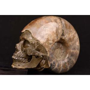 一点物 アンモナイト化石 ヒューマンスカル(人間頭蓋骨) カービング(彫刻) 1857g|白亜紀|マダガスカル産|rapanui