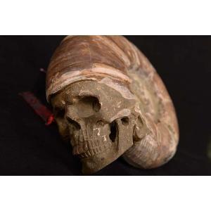 一点物 アンモナイト化石 ヒューマンスカル(人間頭蓋骨) カービング(彫刻) 3168g|白亜紀|マダガスカル産|rapanui