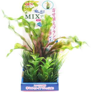 GEX 癒し水景 MIXプランツ M アポノ 【在庫有り】(新商品)|rayonvertaqua