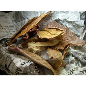 レヨンベール Borneo Leaf ボルネオリーフ 5枚入 【在庫有り】 rayonvertaqua