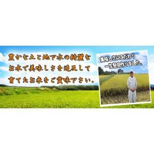 無洗米 お米  10kg (5kg×2袋) 彩のきずな 米 白米  あすつく 埼玉県産 30年産|rc-kaneko|04