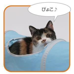 猫壱 キャットトンネル スパイラル ブルーの詳細画像3