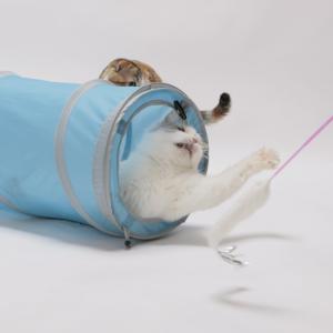 猫壱 キャットトンネル スパイラル ブルーの詳細画像4
