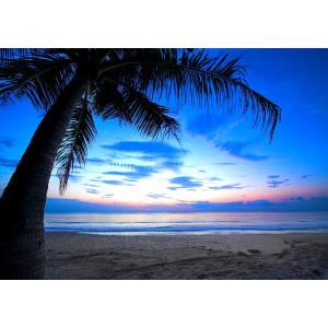 絵画風 壁紙ポスター  夜明けのビーチ カリブ海の日の出 ヤシの木 海 楽園 癒し キャラクロ BCH-029A2 (A2版 594mm×420mm) real-inter