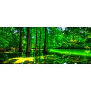 絵画風 壁紙ポスター  -地球の撮り方- 福岡の街中に現れた異世界、篠栗(ささぐり) 九大の森の落羽松 森林セラピー C-ZJP-006P1 (パノラマ版 1440mm×576mm)|real-inter