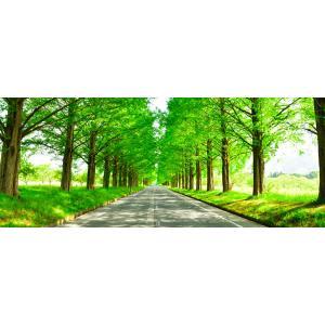 絵画風 壁紙ポスター  -地球の撮り方- どこまでも続く並木道 メタセコイア並木の新緑 滋賀県高島市...
