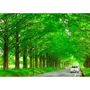 絵画風 壁紙ポスター  -地球の撮り方- どこまでも続く並木道 メタセコイア並木の新緑 日本街路樹百...