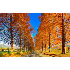 絵画風 壁紙ポスター  -地球の撮り方- どこまでも続く並木道 メタセコイア並木の紅葉 日本街路樹百...